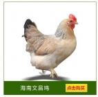 昌江县红林文昌鸡批发部